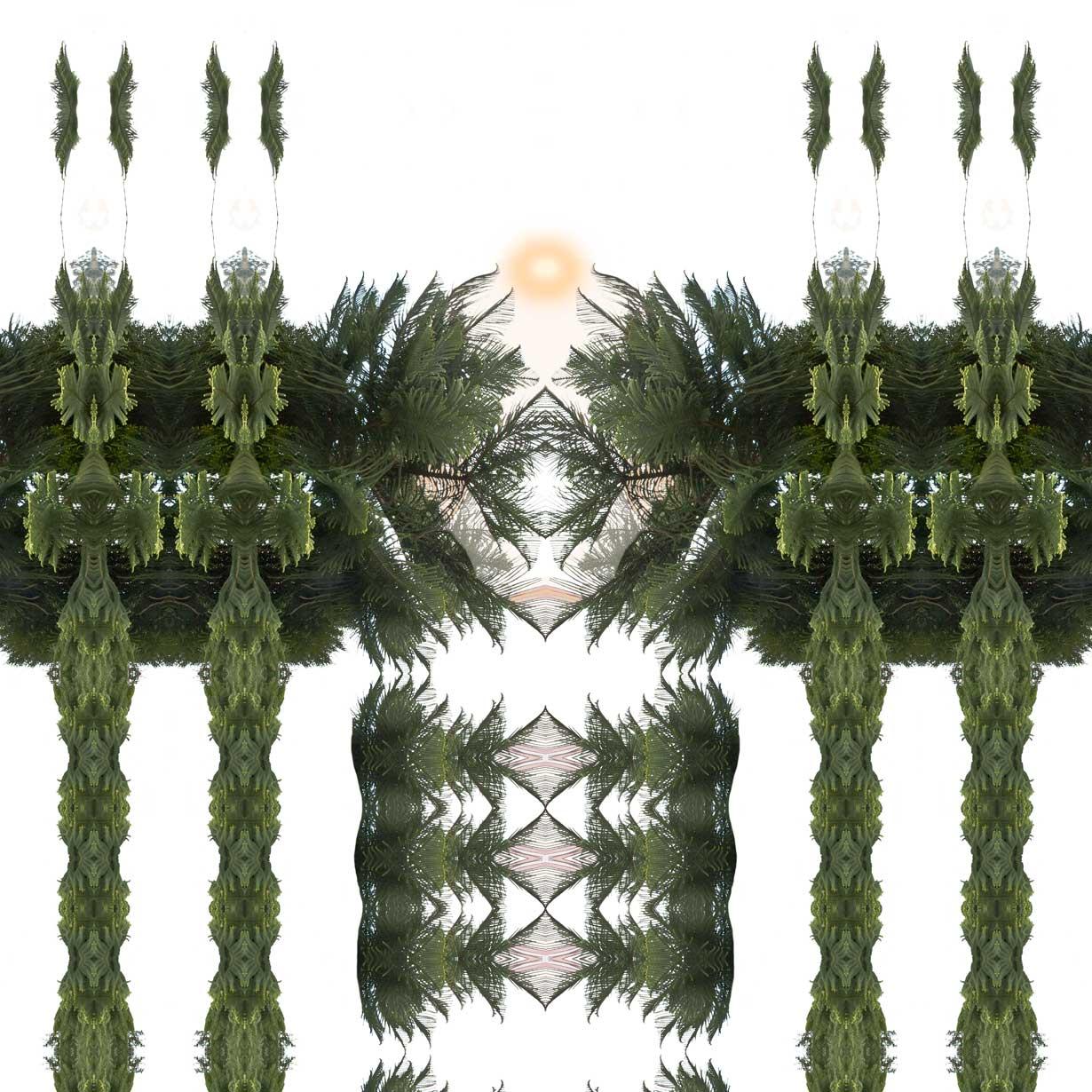Guardiana Araucaria